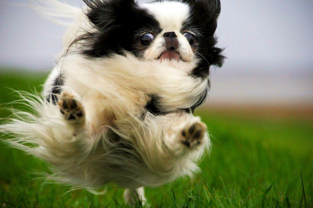 Игривый и веселый пёс