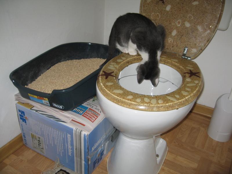 Кошачий лоток с унитазом