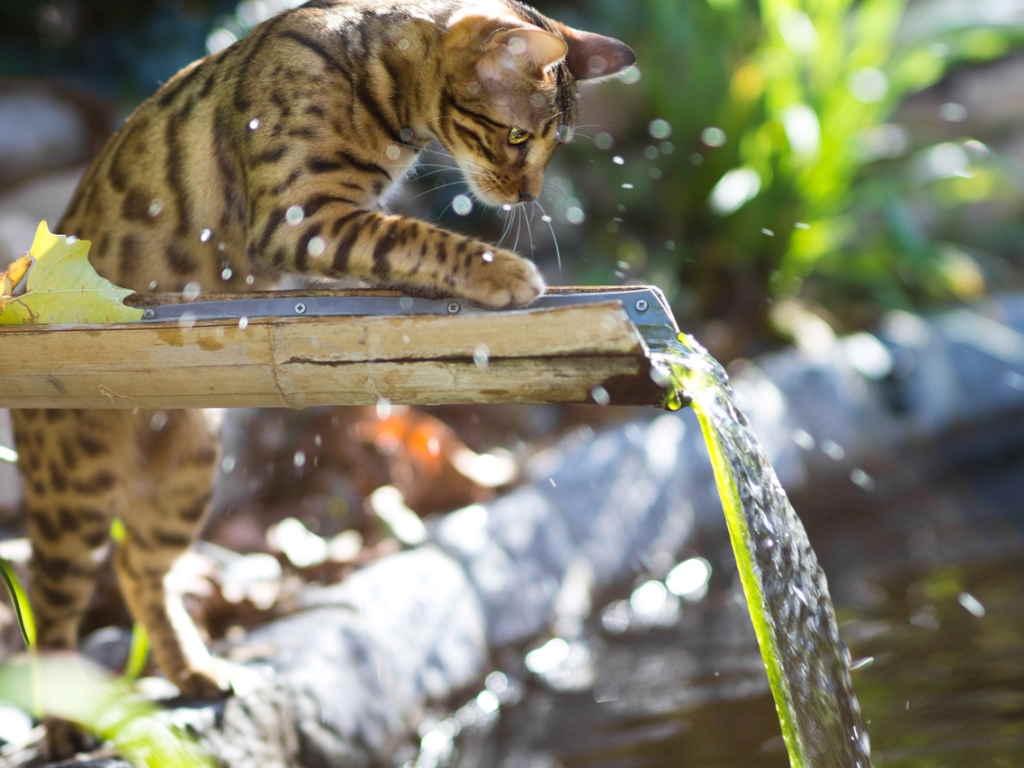 Дефицит воды негативно влияет на животное