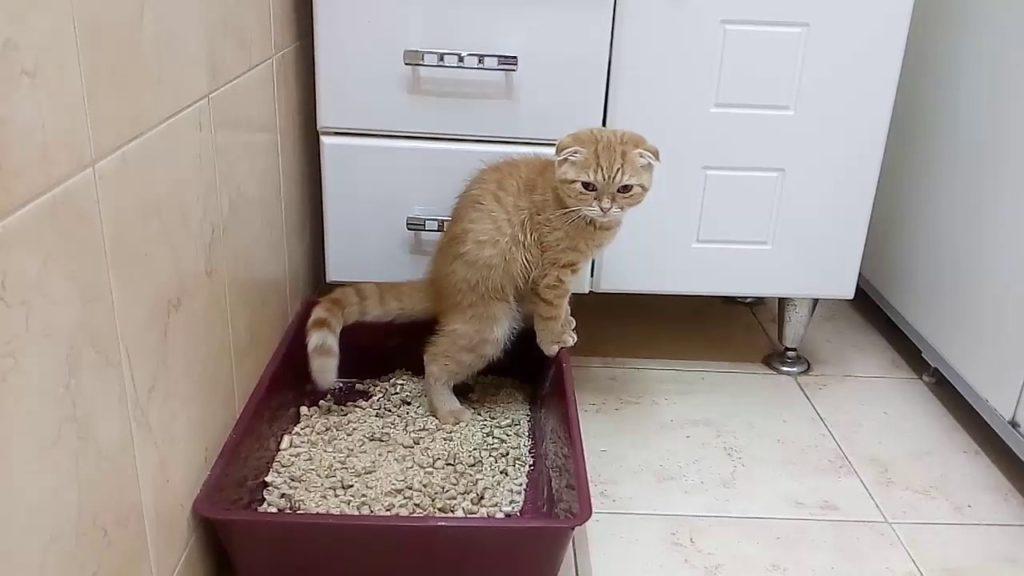 В тяжелых случаях животное стоит запереть в туалете