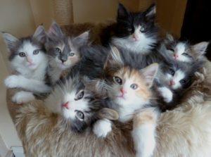 Как правильно и чем кормить котенка в 1,5 месяца?