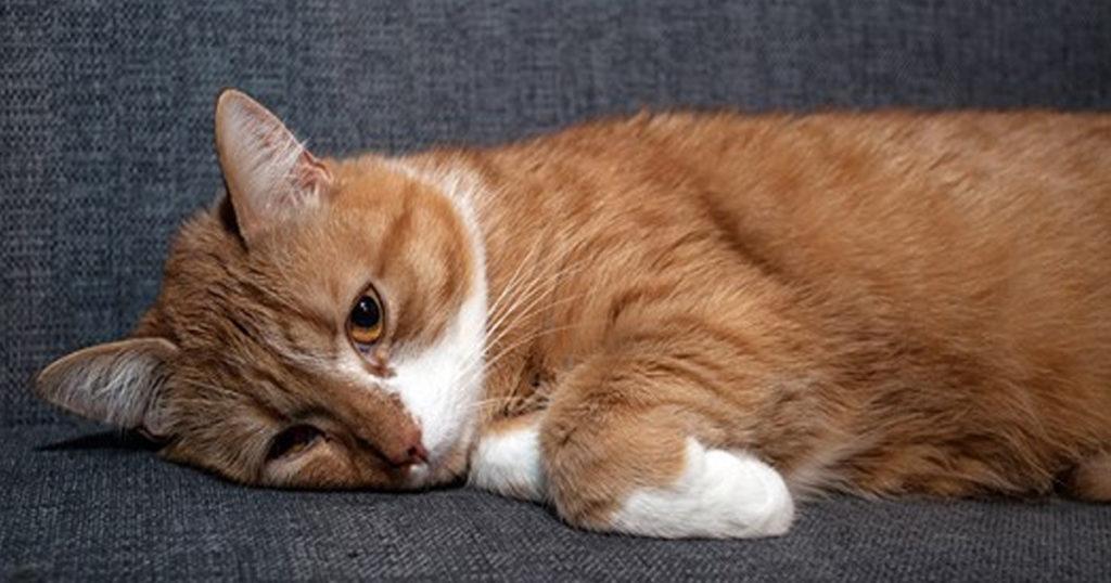 Почему кот мало мочится