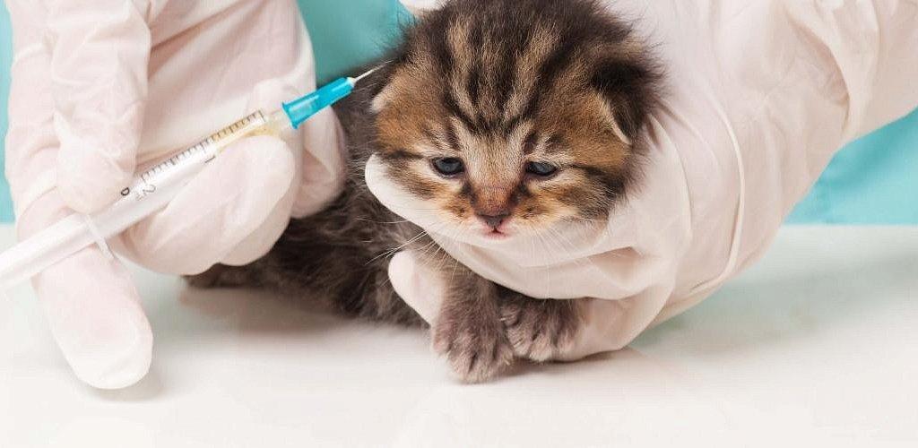 Прививка котенку