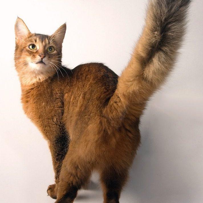 Как коты метят территорию пахнущие следы Почему коты метят территорию