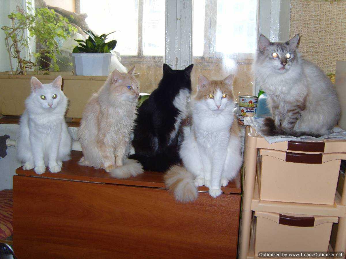 Несколько кошек в доме