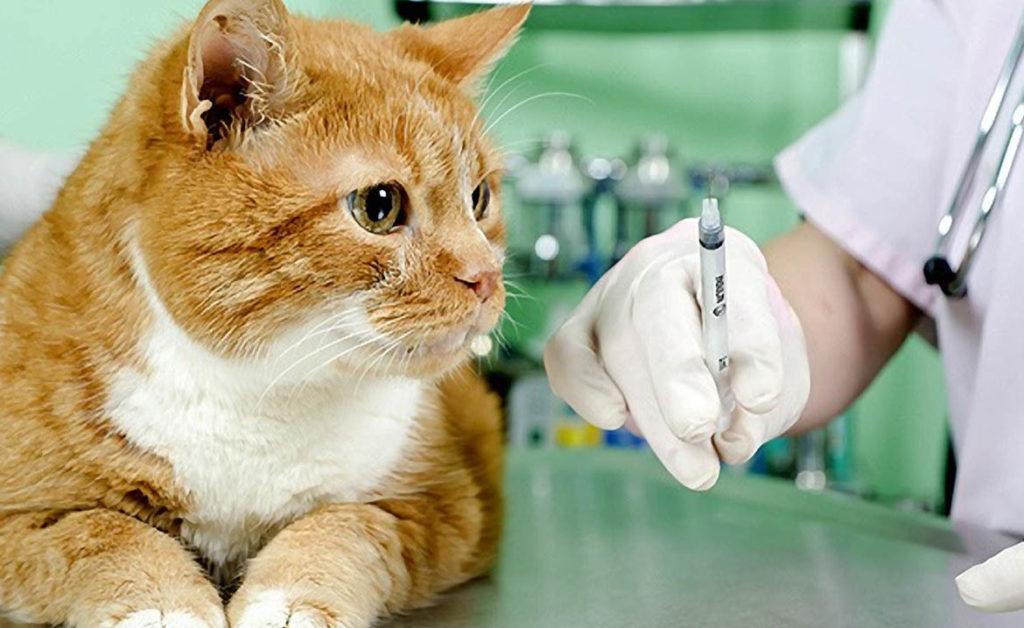 Посещение ветеринара