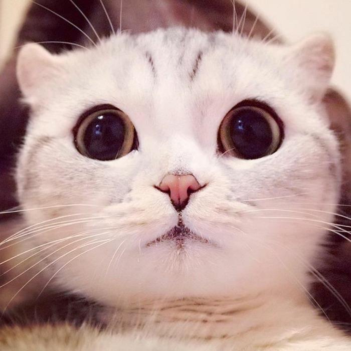 крови обнаружено картинки котика с большими глазами дома