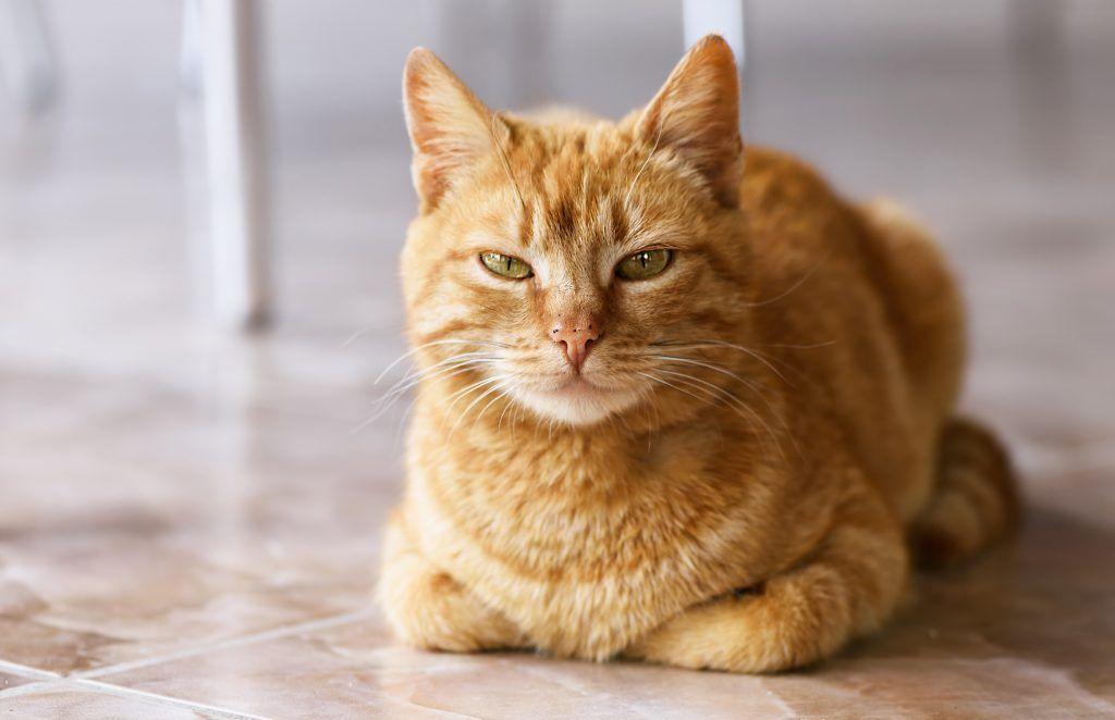 Операция не гарантия, что кот прекратит метить