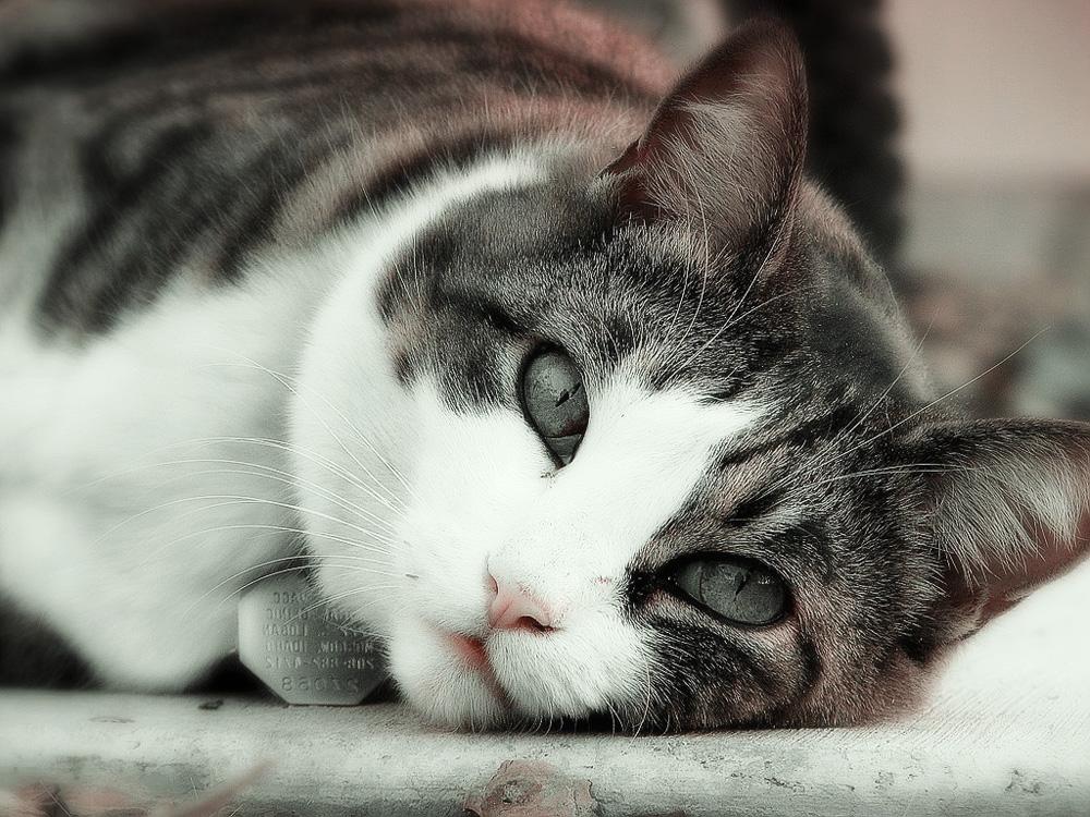 Сколько гуляют кошки и когда они начинают это делать