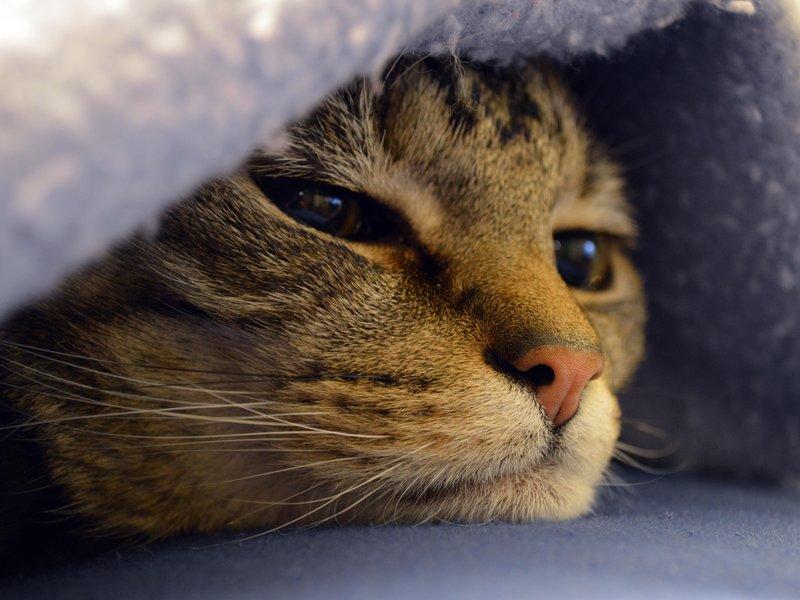 Что делать если у кошки плоскоклеточный рак