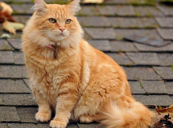 Альбен с инструкция по применению для кошек