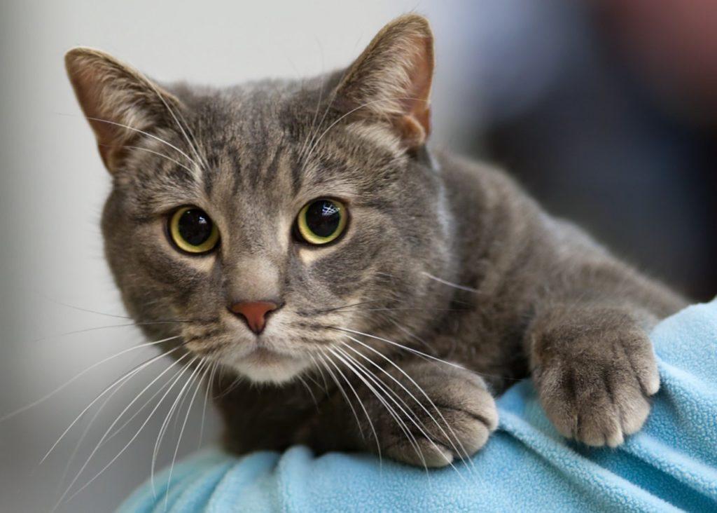 Выпадение кишки у кошек лечение