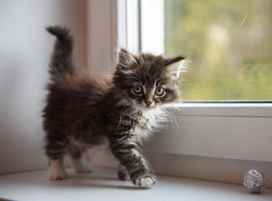 Почему у кошки большой и тврдый живот причины и лечение