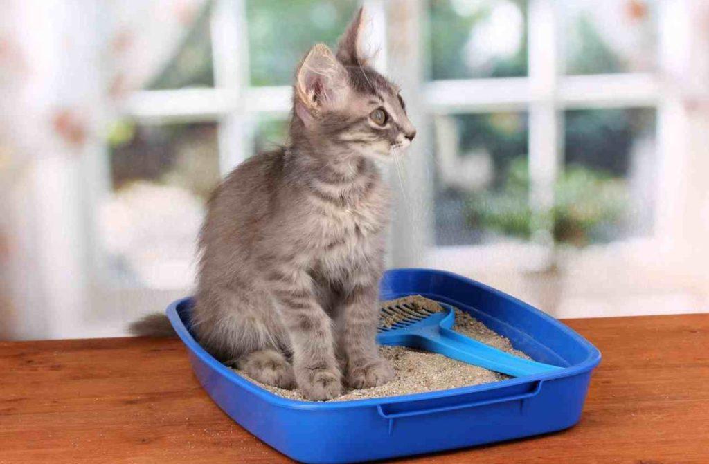 Котенок по долгу сидит в лотке